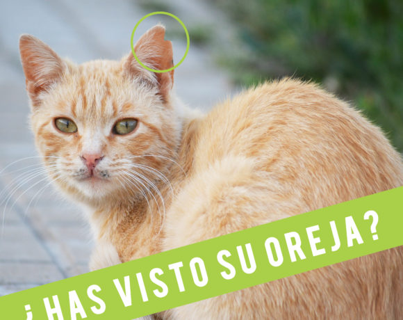 ¿Has visto su oreja?