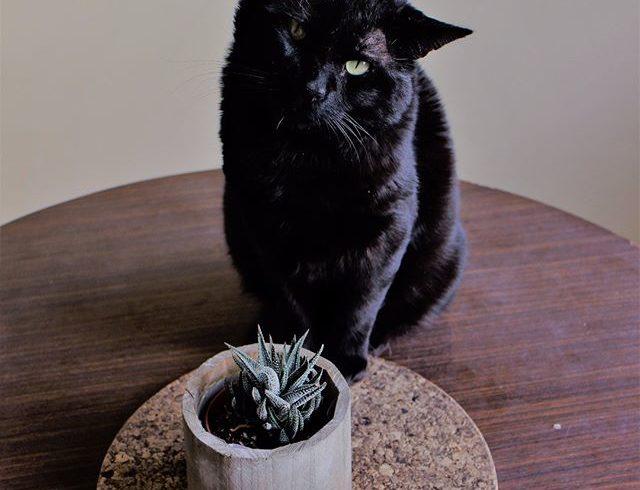 ¡Conviértete en una bruja hecha y derecha y adopta a un gato negro!