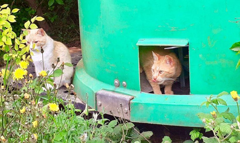 ¡Llegan los Cathoteles! los refugios para nuestros vecinos felinos